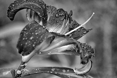 Photograph - Beauty After The Shower by Beth Akerman