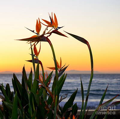 Photograph - Beauty And Beyond by Johanne Peale