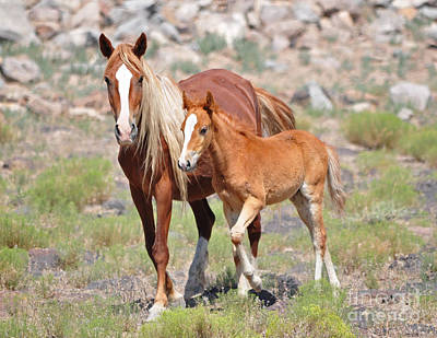 Photograph - Beauty And Her Foal by Lula Adams