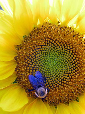 Beauty And The Bee Art Print by Laura Corebello