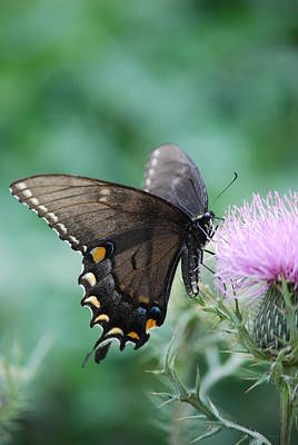 Beauty And Thistle Art Print by Eric Liller