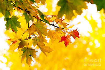 beauty Autumn Leaves Art Print by Boon Mee