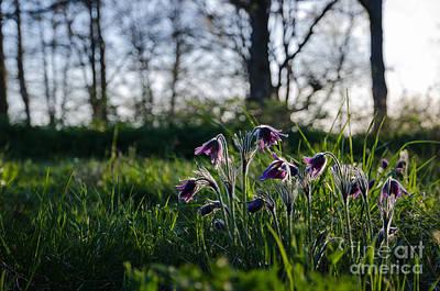 Photograph - Beauty Flowers Group by Kennerth and Birgitta Kullman