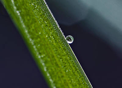 Beauty In A Dew Drop Original