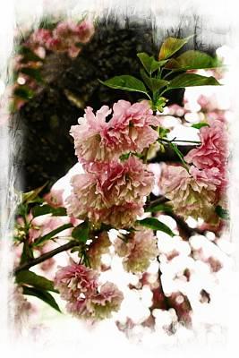 Photograph - Beauty In Bloom by Marcia Lee Jones
