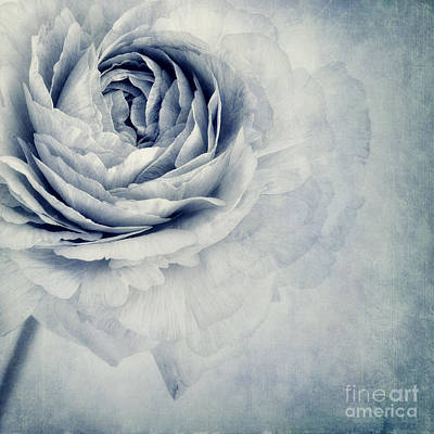 Flower Blossom Photograph - Beauty In Blue by Priska Wettstein