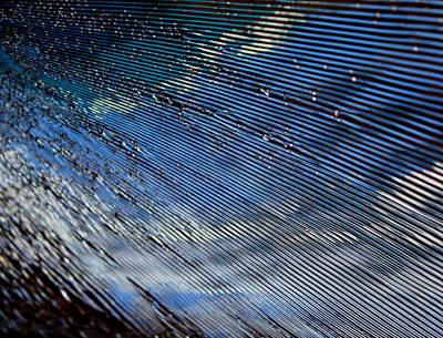 Photograph - Beauty In Destruction by Trent Mallett