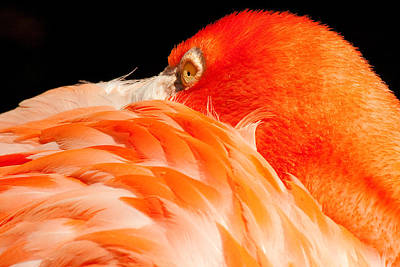 Photograph - Beauty In Feathers by Kristia Adams