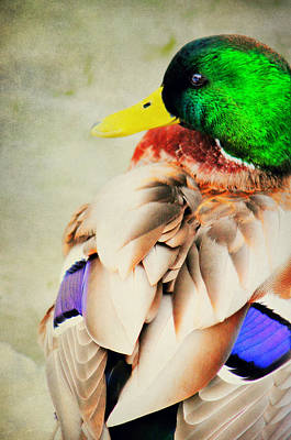 Bird Photograph - Beauty In Green by Emily Stauring
