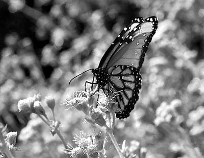 Photograph - Butterfly Beauty In Nature by Kristina Deane
