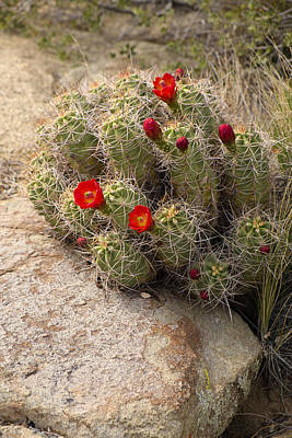 Photograph - Beauty In The Desert by Lucinda Walter