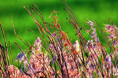 Photograph - Beauty In The Ditch 15894 by Jerry Sodorff