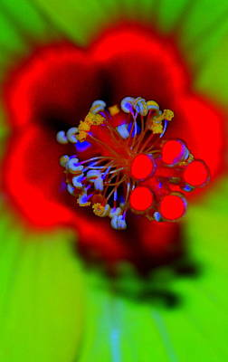 Digital Art - Beauty In The Middle by Kathy Sampson