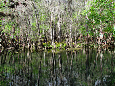 Photograph - Beauty In The Swamp by Judy Wanamaker