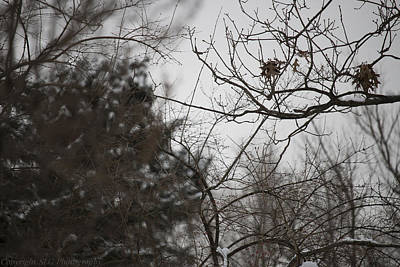 Photograph - Beauty In Winter 2 by Stacie  Goodloe