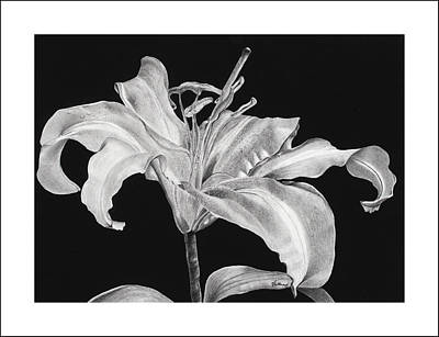 Lilies Drawings - Beauty Is As Beauty Does by V Hollar