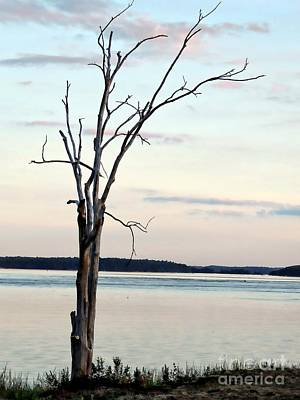 Photograph - Beauty Of A Bare Tree by Marcia Lee Jones