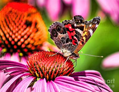 Photograph - Beauty Of A Butterfly by Nick Zelinsky