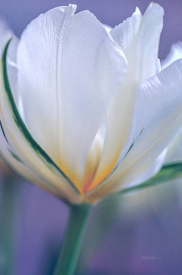 Photograph - Beauty Of A Spring Tulip by Julie Palencia