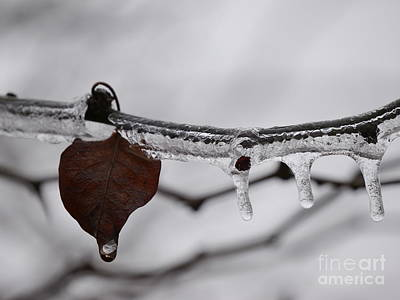 Photograph - Beauty Of Ice by Jane Ford