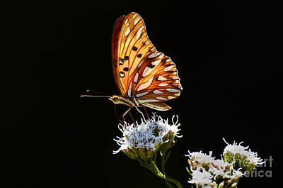 Photograph - Beauty Of Nature Butterfly Brazil 2 by Bob Christopher