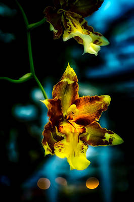 Photograph - Beauty Of Orchids by Julie Palencia