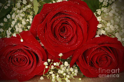 Beauty Of Roses Art Print by Inspired Nature Photography Fine Art Photography
