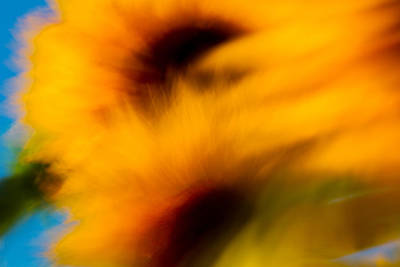 Photograph - Beauty Of Sunflowers by Kunal Mehra