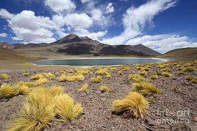 Photograph - Beauty Of The Landscape Chile South America by Bob Christopher