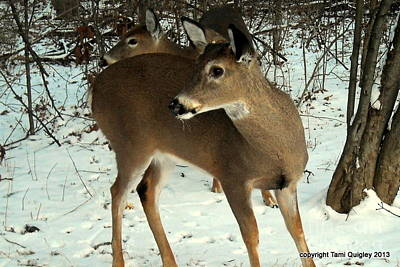Photograph - Beauty Of The White-tailed Deer by Tami Quigley