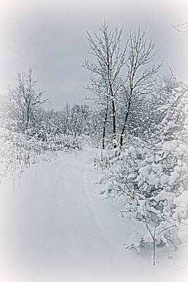 Photograph - Beauty Of Winter by Kay Novy