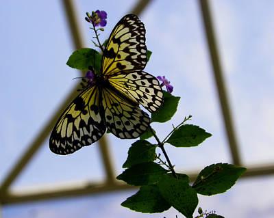 Photograph - Beauty On The Wing by Judy Wanamaker