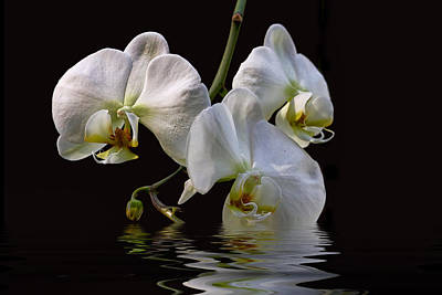 Photograph - White Orchids by Peggy Collins