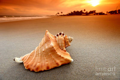 Beauty Shell Art Print by Boon Mee