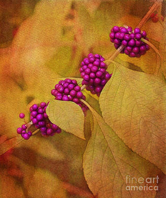 Photograph - Beautyberry by Judi Bagwell
