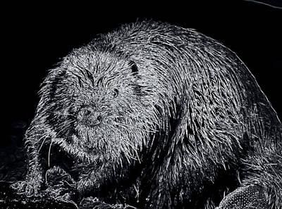 Beaver Digital Art - Beaver 1 by Todd Hostetter