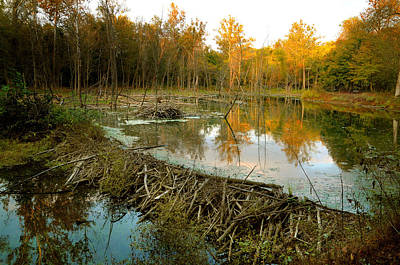 Photograph - Beaver Dam And Lodge by Kenneth Murray
