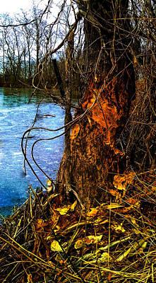 Photograph - Beaver Does It. by Jeff Kurtz