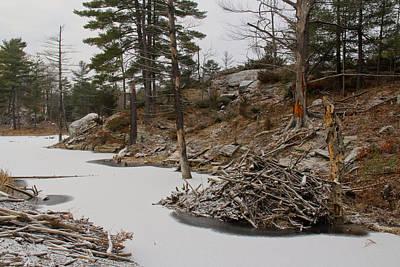 Photograph - Beaver Hut by Jim Vance