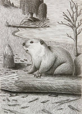 Willow Lake Drawing - Beaver by Jeanette K