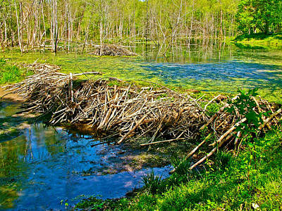 Beaver Lodge And Dam On Colbert Creek Along Rock Spring Trail In Natchez Trace Parkway-alabama Art Print by Ruth Hager