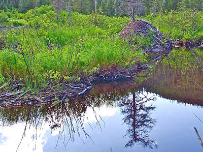 Beaver Lodge Near Trail To Pic Du Brule In Gaspesie National Park-quebec-canada Original by Ruth Hager