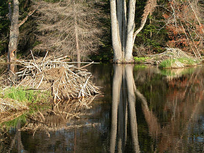 Photograph - Beaver Lodge On Beaver Pond by Rob Huntley