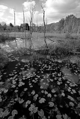Photograph - Beaver Marsh Black And White by Clint Buhler