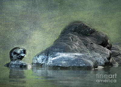 Photograph - Beaver On A Rock by Belinda Greb