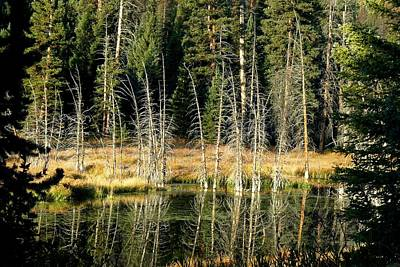 Photograph - Beaver Pond by Marilyn Burton