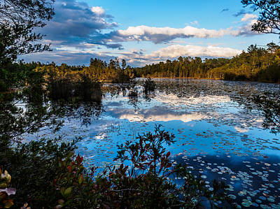 Pine Barrens Photograph - Beaver Pond - Pine Lands Nj by Louis Dallara