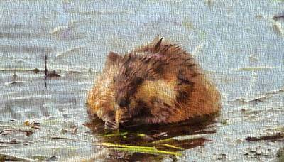 Wetland Painting - Beaver Portrait On Canvas by Dan Sproul