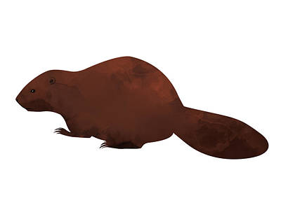 Beaver Digital Art - Beaver by Randoms Print