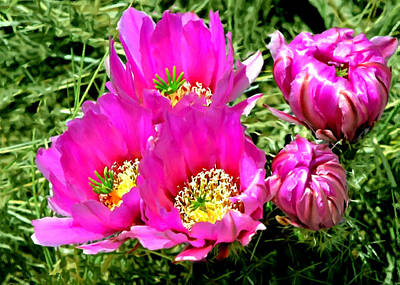 Painting - Beaver Tail Cactus Painting by Bob and Nadine Johnston